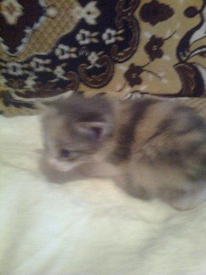 Муся и ее котята0203.jpg