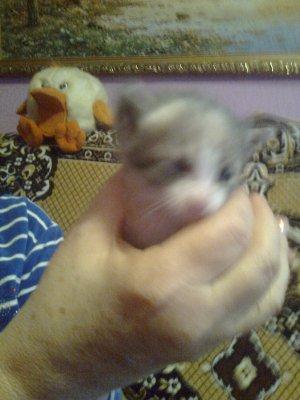 Муся и ее котята0202.jpg